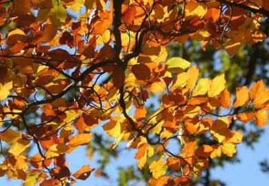 Magyarországon a klímaváltozáshoz alkalmazkodni képes fa fajokat kell telepíteni