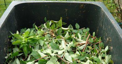 Komposztálásra váró növényi hulladék égett