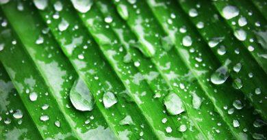 A pálmaolaj fenntartható termelését kéri az EP